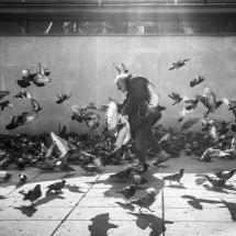 21 - Yrille HEURLIE - Petit déjeuner des pigeons