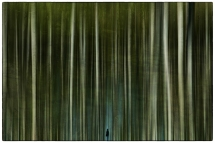 6 - Catherine GARIN - Foret d'ombres
